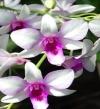 اعرف الوردة اللى بتعبر عن شخصيتك من برجك
