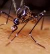 علماء صينيون وفرنسيون يتوصلون لمصل مضاد لفيروس زيكا