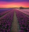 هولندا المذهلة .. وجمال مبهر يفوق الخيال