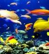 """خبراء يسجلون """"غناء الأسماك"""" تحت الماء"""