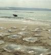 البيئة : مجموعة عمل لدراسة انتشار قناديل البحر على السواحل المصرية