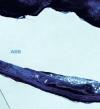 بالصور.. جبل جليدى 4 أضعاف حجم لندن يبدأ الانجراف نحو البحر