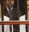 """عودة علاء وجمال مبارك للسجن فى قضية """"التلاعب بالبورصة"""""""