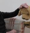 كلب آلي يساعد المسنين ويعيد إليهم الذاكرة