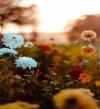 الرمد الربيعي أحد أمراض الحساسية