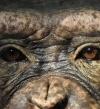 جدرى القردة .. مرض فيروسى نادر جديد لا علاج له