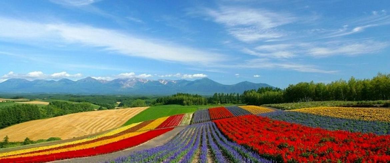 هوكايدو .. مروج الطبيعة الملونة بمذاق يابانى ونكهة اوروبية