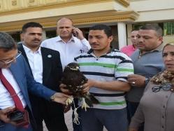 """بالفيديو.. نسر يحتمى من قطيع """"غربان"""" بديوان كفر الشيخ"""