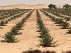 القوات المسلحة تشارك جهود الدولة فى تحقيق التنمية الشاملة بشمال سيناء