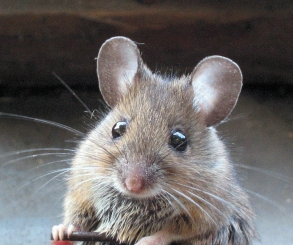 بالفيديو.. لحظة هروب فأر الكنغر من أفعى بأعجوبة