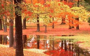بالصور .. شاهد واستمتع بجمال فصل الخريف .. المفترى عليه