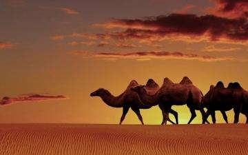 روعة الصحراء الكبرى .. ومفرداتها من نخيل وجمال