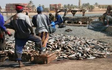 تعاون مصرى موريتانى فى مجال الصيد البحرى