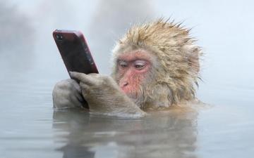 بالصور .. أجمل لقطات الحياة البرية في مسابقة بي بي سي 2014