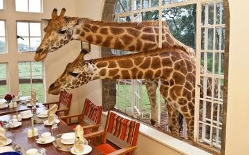 بالصور .. روعة الاستجمام بين فخامة الفنادق واحضان الطبيعة