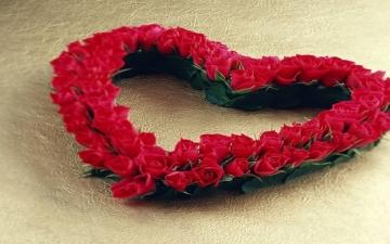 """""""لكل لون معنى ومغنى""""..اعرف معانى ألوان الورد قبل الفلانتين"""