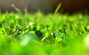 الطاقة الحيوية .. أهم مصادر الطاقة