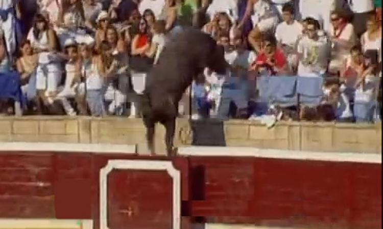 بالفيديو … ثور يقتحم المدرجات ويصيب الجماهير بالهلع