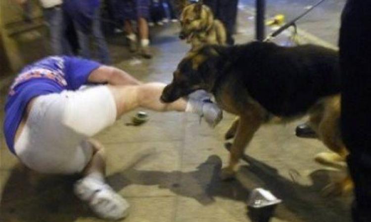 كلب يعقر 19 شخصًا بالإسماعيلية في يوم واحد