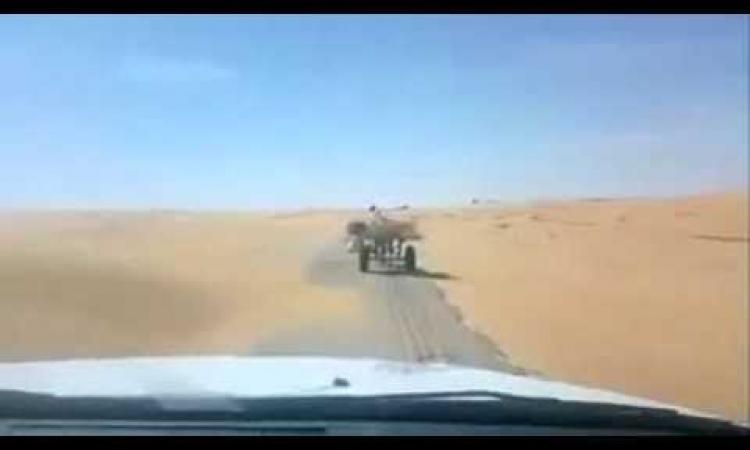 شاهد بالفيديو .. كلب وحمار ذكي في الصحراء بدون صاحب