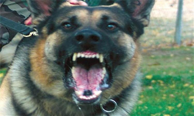 إصابة 19 شخص بالإسماعيلية بعقر كلب في يوم واحد