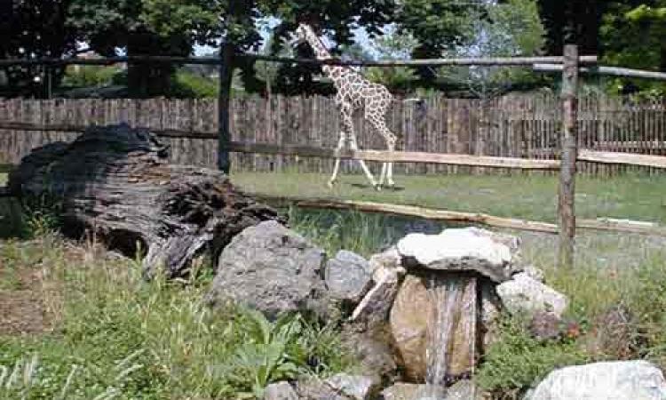 إخلاء حديقة الحيوان من الزوار وتمشيطها