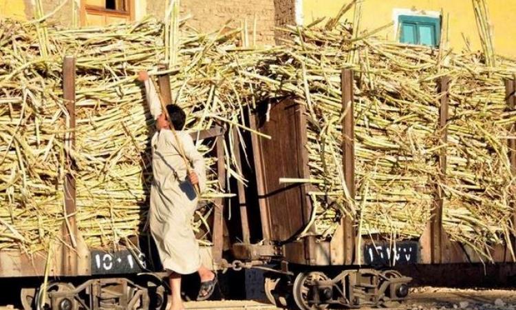 نقابة الفلاحين تطالب رئيس الوزراء بزيادة سعر القصب