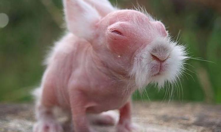 ملف مصور .. شكل الحيوانات بدون شعر يكسوها