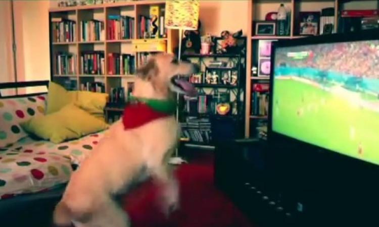 بالفيديو.. كلب يقفز فرحاً بعد هدف البرتغال في المونديال