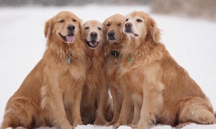 دراسة أمريكية : الكلاب تشعر بالغيرة أيضا !!
