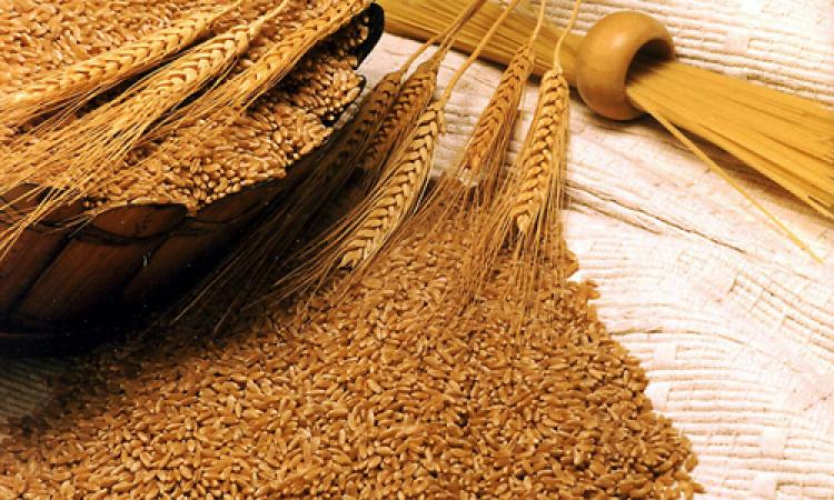تعرفي على فوائد هامة لجنين القمح