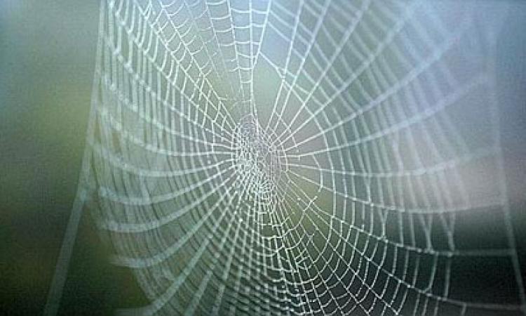 خيوط العنكبوت .. أمل العلماء لإحراز صيحة فى طب التجميل