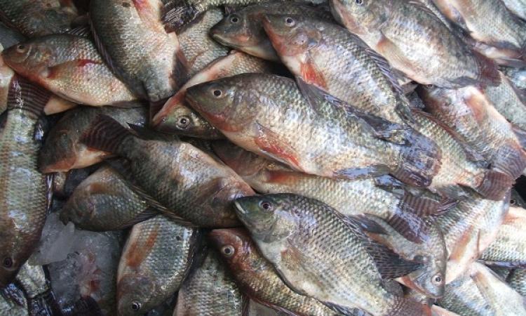 التموين تطرح 30 ألف طن أسماك بالمجمعات بأسعار مخفضة