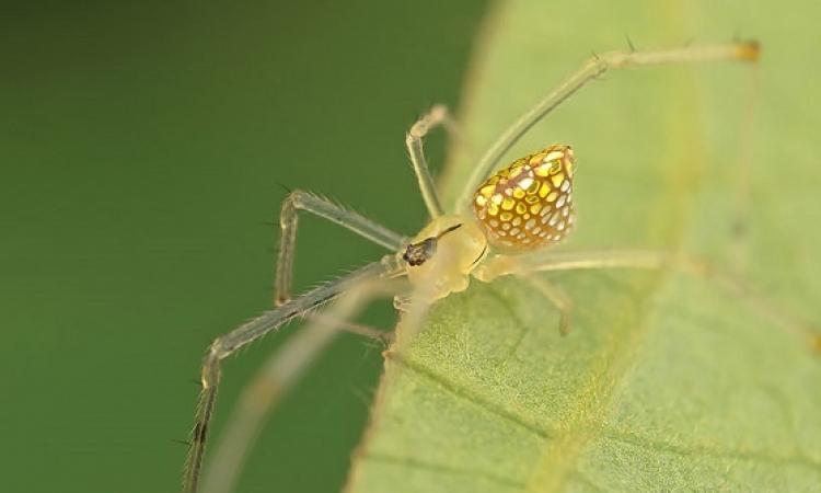 العناكب الصفراء تحتل بريطانيا.. كائنات ديما مزعجة
