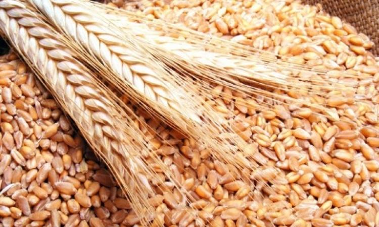 وزير التموين : الاحتياطي الاستراتيجي من القمح يكفي لمدة 6 أشهر قادمة