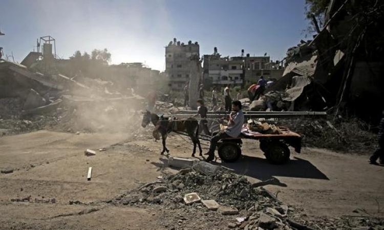 الجيش الإسرائيلى: تم استهدافنا بـ«حمار» مفخخ فى غزة