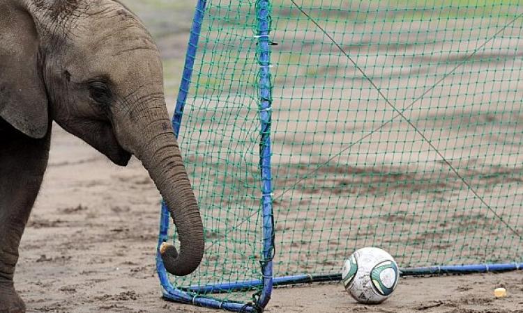 الفيل زيمباوي يتوقع فوز كولومبيا على البرازيل