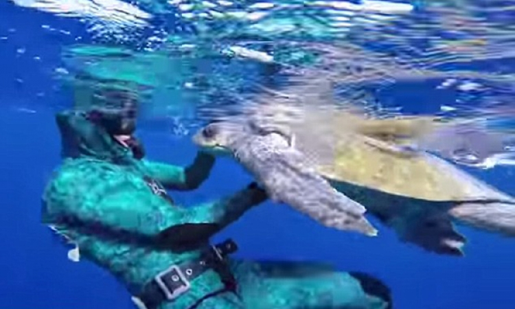 سلحفاة تشكر غواصا أنقذها من شباك الصيادين