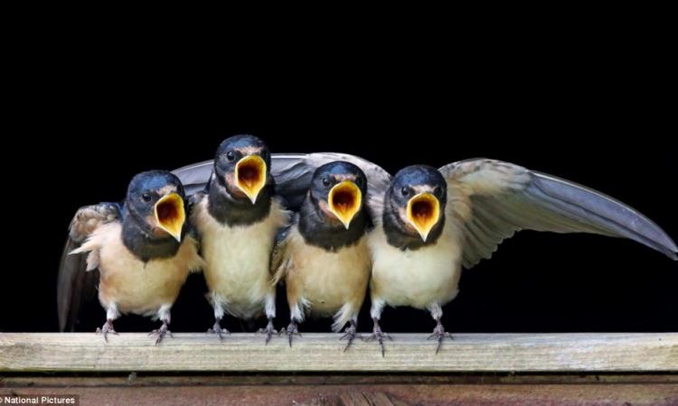 بالصور.. الأمومة فى عالم الطيور