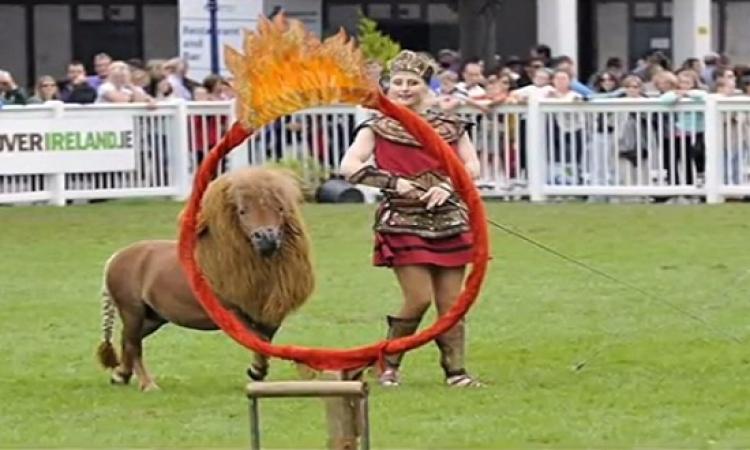 بالفيديو .. الحصان النادر Luma في استعراض رائع بايرلندا