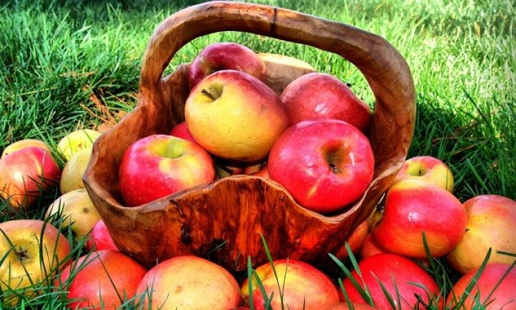 التفاح .. يقي من الجلطات وأمراض القلب والسرطان