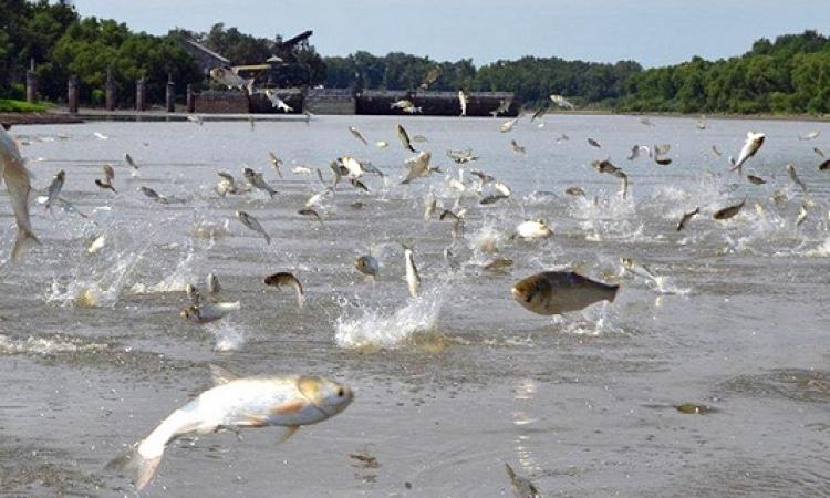 بالفيديو .. شاهد السمكة الفضية وهو تطير فى الهواء