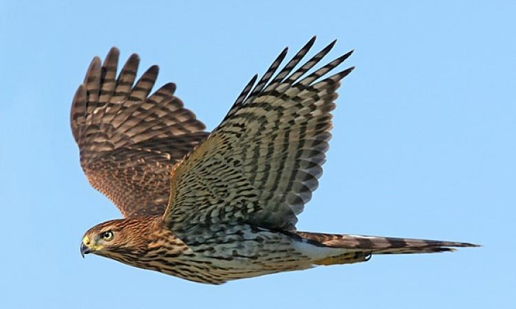 دراسة : الديناصورات المفترسة أصل طيور اليوم
