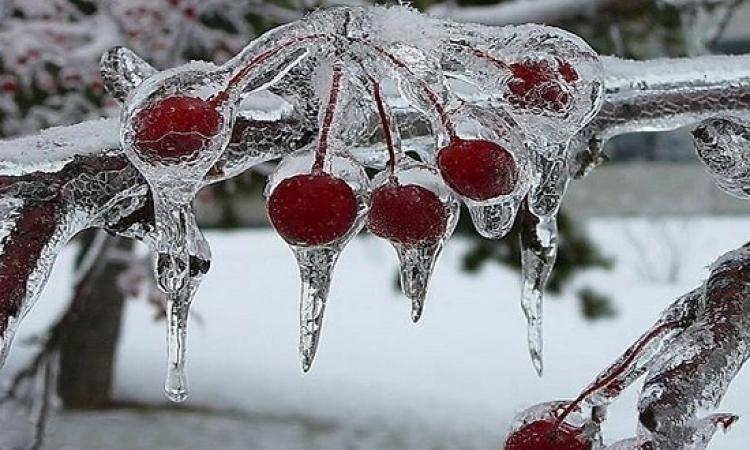 بالصور .. تمتع بروعة وجمال أشجار الكرز المثلجة أثناء فصل الشتاء
