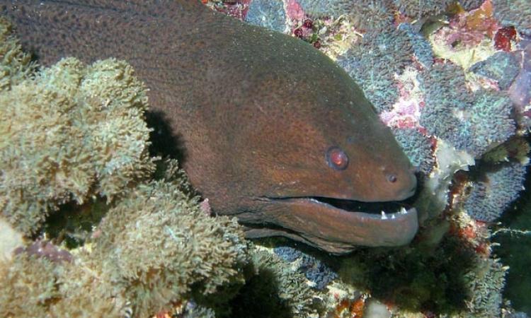 نفوق أقدم ثعبان بحر فى العالم بالسويد عن 155 عاماً