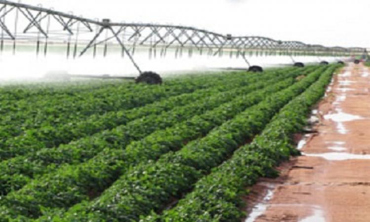 الزراعة والري يعلنان الطوارئ لإحياء مشروع شرق العوينات
