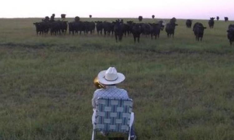 بالفيديو .. مقطوعة الفلاح وقطيع البقر تحقق 5.5 مليون مشاهدة في أسبوع