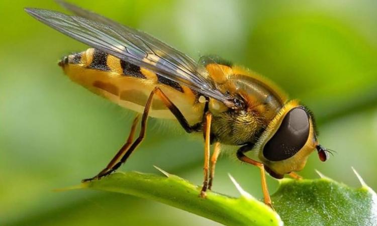 لدغات النحل علاج لجميع الأمراض