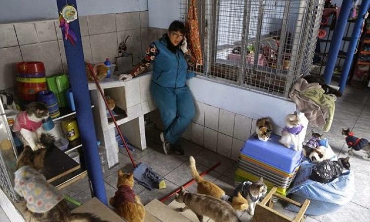 """بالصور.. ملجأ لرعاية القطط المريضة بـ""""بيرو"""""""