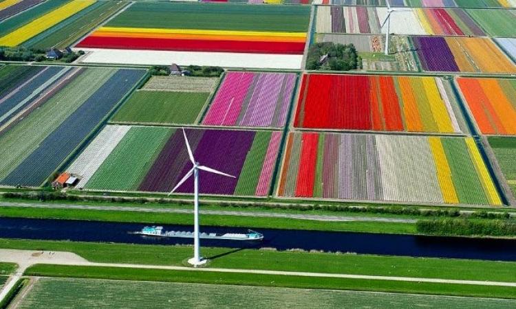 صور جوية مذهلة لحقول زهور أمستردام